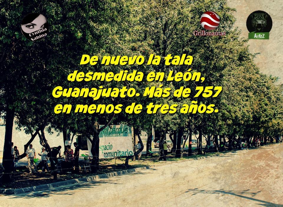 De nuevo la tala desmedida en León, Guanajuato. Más de 757 en menos de tres años.