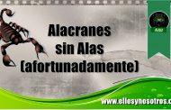 Los adoctrinados de la Secta (Morena) son los mexicanos más miserables