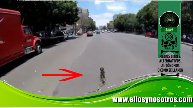 Se vuelve viral persecución en bicicleta para salvarle la vida a un perrito
