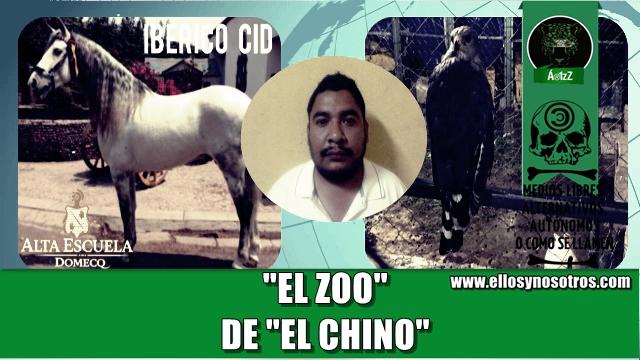 Chip de los caballos de Domecq llevaron a la Marina hasta el zoológico de